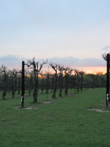 sunset over Wales Manor vineyards